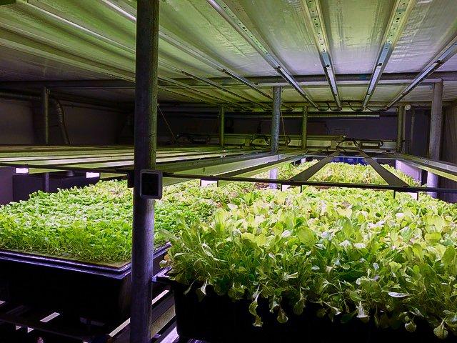 indoor farming, sustainable